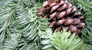 How to boil pine cones