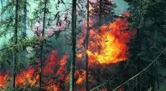 Как остановить лесные пожары в Сибири