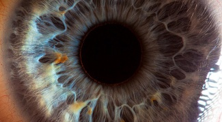 Where grown retina from stem cells
