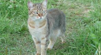 Как защитить садовый участок от кошки