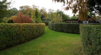 Как создать красивую живую изгородь