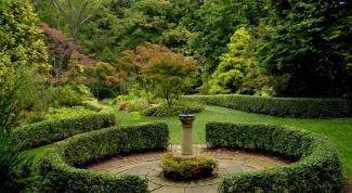 Как ухаживать за живой изгородью