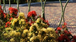 How to use color in landscape design