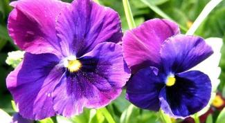 Как обезопасить комнатные растения от вредителей
