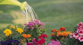 Как часто нужно поливать огород