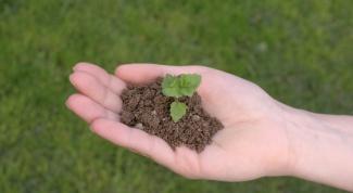 Почему укрывают посевы