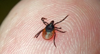 How to identify tick-borne encephalitis