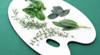 Какая зелень содержит больше витаминов
