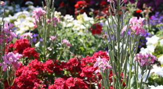 Как оформить дачный цветник своими руками