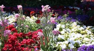Как ухаживать за садом в июле