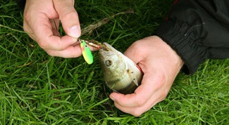 Какую рыбу лучше ловить