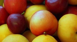 Как сделать компот из абрикосов и слив