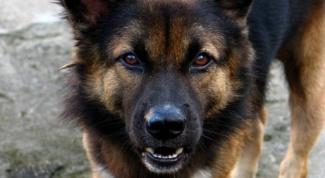 Что может быть за укус собаки