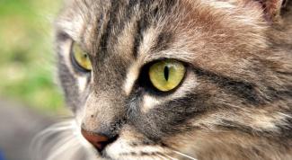Как сделать дом для кошек своими руками