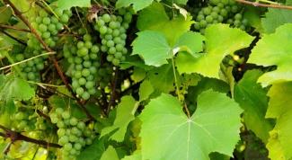Как подготовить виноградные листья