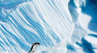 Как Google сфотографировал Антарктику