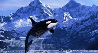 Как отмечают Всемирный день китов и дельфинов в мире