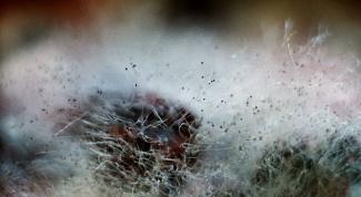Как бороться с домовым грибком