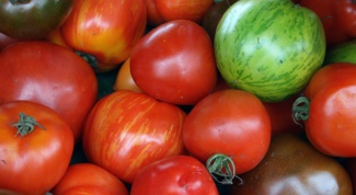 Indoor tomato varieties: cultivation and care