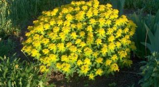 Как пересаживать многолетние растения