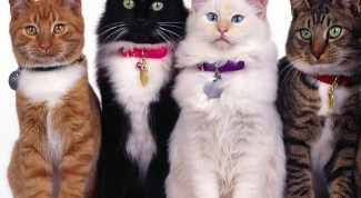 Как проходит выставка кошек