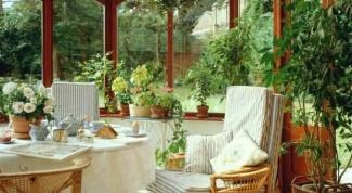 Как ухаживать за комнатными растениями летом