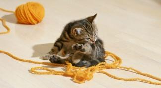 Как лечить глаза котенку