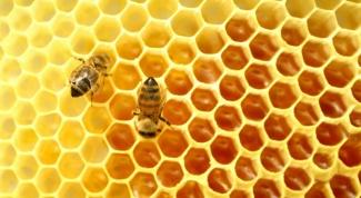 Что нарушил американец, державший пчел как домашних животных