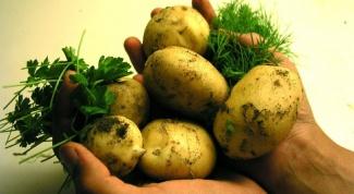 От чего зависит вкус картошки
