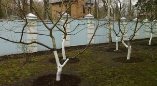 Как подготовить садовые деревья к зиме