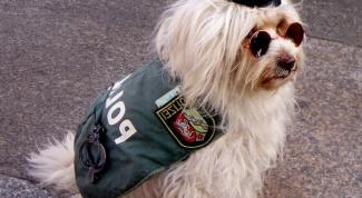Какими качествами должна обладать служебная собака