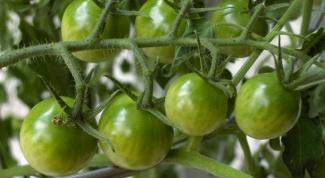 Как приготовить аджику из зеленых помидоров