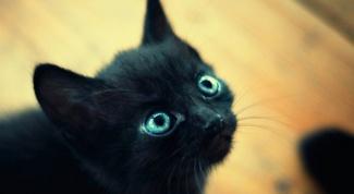 Почему глаза котенка меняют цвет