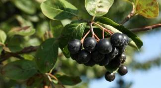 Как приготовить черноплодное варенье со сливами