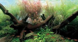 Как узнать состав воды в аквариуме