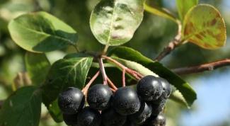 Как приготовить черноплодное варенье