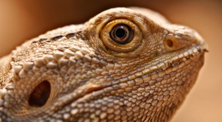 Как содержать экзотическое животное в домашних условиях
