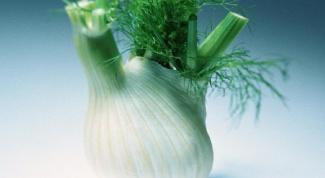 Способы выращивания фенхеля и его полезные свойства