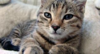 Кастрация котов: мнения за и против