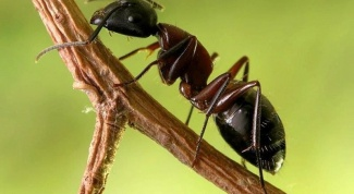 How to protect trees from ants