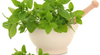 Useful properties and applications of aromatic Basil