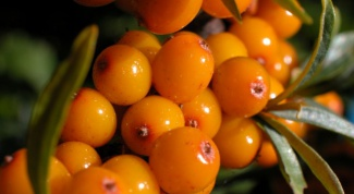 Heal wounds with sea buckthorn