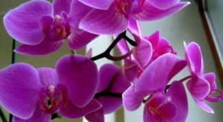 Как в природе растут орхидеи