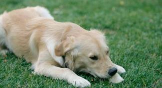 Как избавиться от клещей собаки