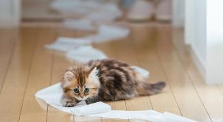 Как играть с котёнком