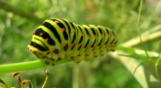 How to get rid of caterpillars