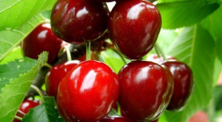 How to get rid of growth cherry