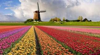 Как добраться до Голландии