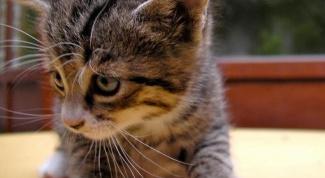 Как заботиться о котенке
