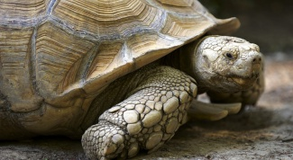 Как дышат черепахи